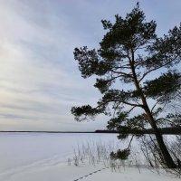 Поет зима – аукает, мохнатый лес баюкает стозвоном сосняка. :: Galina Leskova