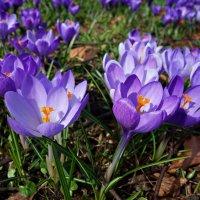 """""""И цветы мне головкой кивают, Разливая кругом аромат...."""" :: Galina Dzubina"""