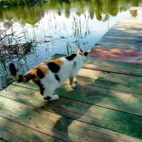 Отправилась на рыбалку... :: Лидия Бараблина