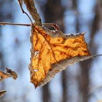Ждём с нетерпеньем снова листвы зелёной, не пожухлой! :: Андрей Заломленков
