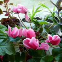 Цветы на окне :: Надежда