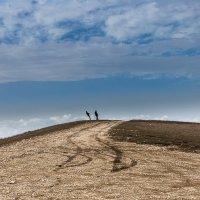 Ветреный день на горе Клементьева :: Анатолий Мигов
