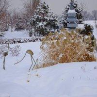 В зимнем парке :: LORRA ***