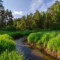лесной ручей )) :: Игорь Козырин