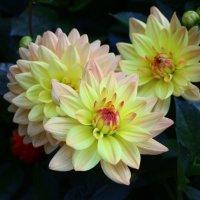 Осенние цветы в Праге :: Леся Сафронова