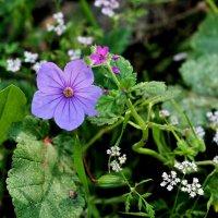 Неизвестный мне цветок :: Аркадий Басович