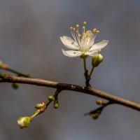 Весна рядом... :: Виктор Чепишко