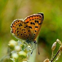 крылатые цветы 3 :: Александр Прокудин