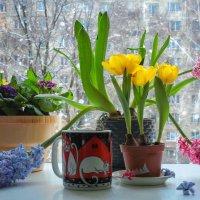 О мартовских котах и ожидании весны... :: Svetlana Sneg