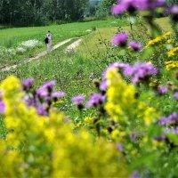 Дорога в деревню :: Валерий Талашов