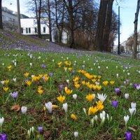 Весна  в городе...Аугсбург... :: Galina Dzubina