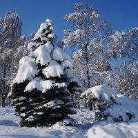для Москвы - зима крассотка 01 :: Kriss Ампар