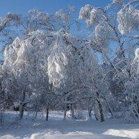 """Москва зима """"красотка"""" :: Kriss Ампар"""