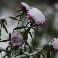 Первый снег II :: san05   Александр Савицкий