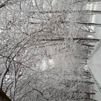 Зима и ее отголоски :: Юлия Осипова