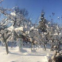 Зимний день на даче :: Наталья Александрова
