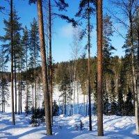 Зимний пейзаж :: Сергей Беличев