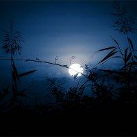 Эльфийская ночь. :: Вера Катан