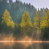 Весенняя листва берёз :: Фёдор. Лашков