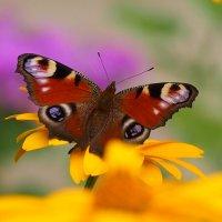 про бабочек 5 :: Александр Прокудин