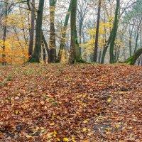 Гнилая Осень :: Яна