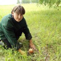 Первый гриб :: Светлана Рябова-Шатунова
