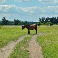 Лошадь деревенская :: Валентина Пирогова