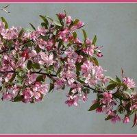 Весеннее цветение :: Татьяна Георгиевна