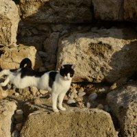 Кошка в полете :: Svetlana Erashchenkova