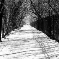 Дорожка вдоль изгороди :: Алексей Саломатов