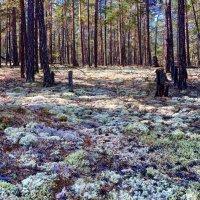 Таинственный лес :: Наталья Сахиуллина