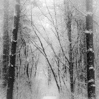 « Зимний лес в объятьях тишины Задремал, укутав ветки снегом…» :: Андрей Нибылица