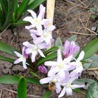 Весна на даче! :: Светлана Масленникова