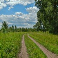 Лесная дорога :: Валентина Пирогова