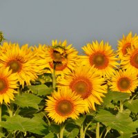 Смотрящие на солнце :: Валентина Пирогова