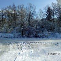 Зимний денек :: Лариса Брагунец