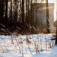 Снег :: Вера Аксёнова