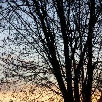 На закате .... :: Светлана Z.