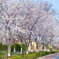 Весна, Навруз :: Mir-Tash