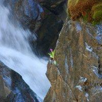 Грозный водопад и хрупкий цветочек. :: Anna Gornostayeva