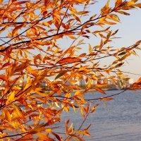 Рыжие ветви :: Алексей Баринов