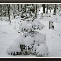 Зимняя красавица :: Милешкин Владимир Алексеевич