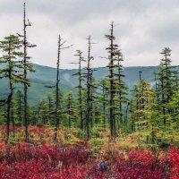 Природа Магадана... :: Аnatoly Gaponenko