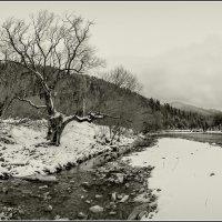 Графика зимы.... :: Юрий Гординский