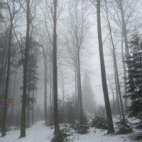 Туман в лесу... :: Mariya laimite