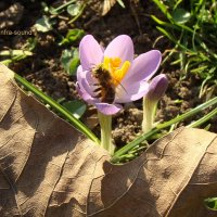 Первая пчелка :: Lüdmila Bosova (infra-sound)