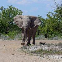 Слон. :: Jakob Gardok