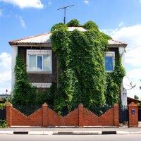 Челка богатого дома :: Лира Цафф