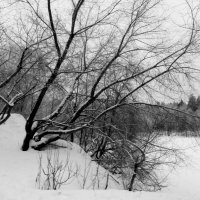 На берегу озера :: Raduzka (Надежда Веркина)
