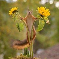 between sunflowers :: ian 35AWARDS